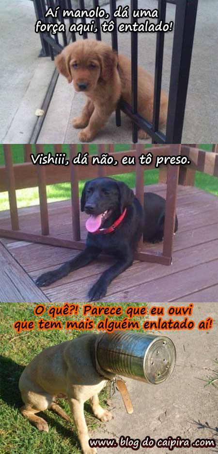 cachorro-preso